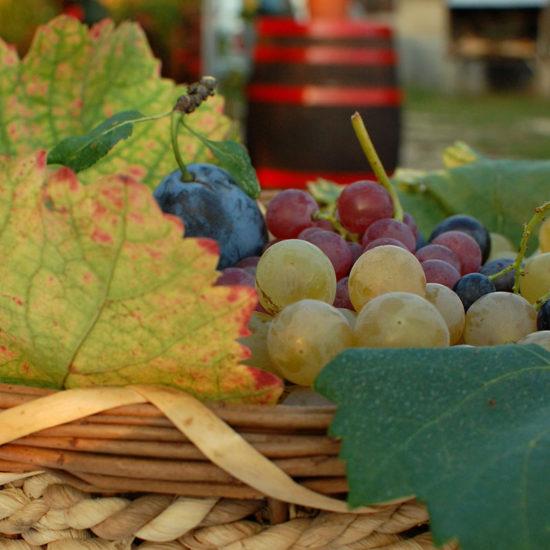Grócz Pincészet szőlő tál
